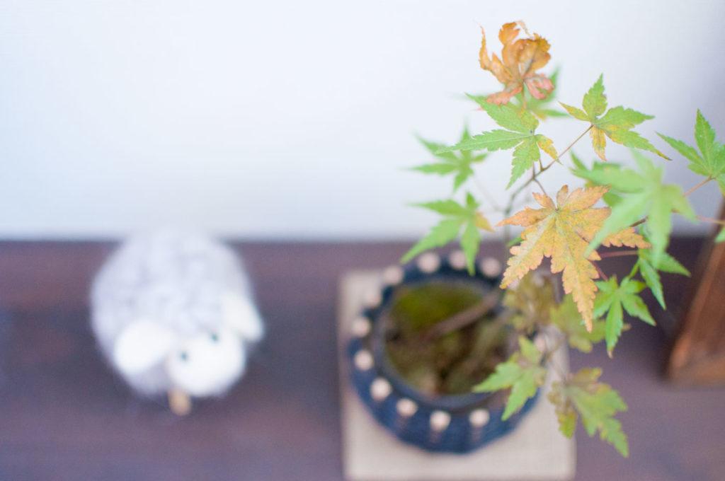 ミニ盆栽の置き方例